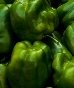 Capsicum Green Vegetable