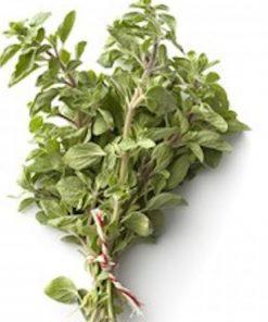 Marjoram Herbs